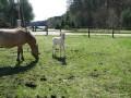 2011-04-16_013_zrebie_na_pastwisku