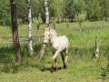 2011-06-11_092_Konie