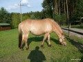 2010-08-20_013_Funia