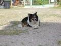 2006-07-01_049_nero