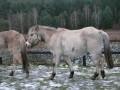 2009-01-24_017_Nimfa