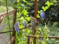 2006-07-09_041_papugi