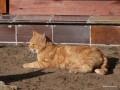 2008-10-11_019_rudzik