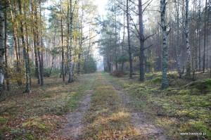 Las w Kwiejcach